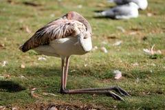 Bird sleeps. Bird sleeping on his lap in the park Stock Image