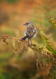 Bird. A Small bird looks for food Royalty Free Stock Photography