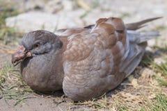 ิbird Stock Image