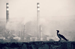 Bird and Smoke Stacks Stock Photo