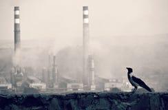 Bird and Smoke Stacks Stock Photo