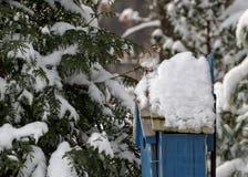 Bird in Snow on Bird House Stock Photography