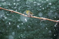 Bird in snow royalty free stock photography