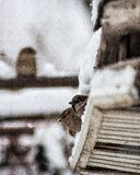 Bird snow Royalty Free Stock Images
