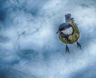 A tinner landed on snow watching for food Royalty Free Stock Image