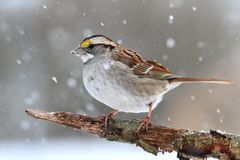 Bird In Snow Stock Photo
