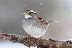 Bird In Snow Stock Image