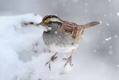 Bird In Snow Stock Photography