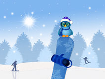 Bird on snowboard in winter Royalty Free Stock Image