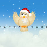 Bird with snowflake in winter Royalty Free Stock Image
