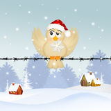 Bird with snowflake in winter Stock Images