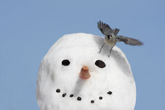 Bird On A Snowman Stock Photo