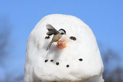 Bird On A Snowman Stock Photos