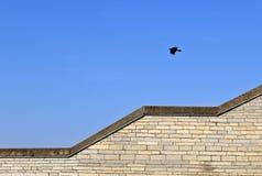 Bird soaring in the sky Stock Image