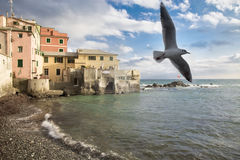 Bird soars over gently lapping waves at shore Royalty Free Stock Photos