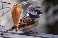 Bird, Sparrow, Fauna, Beak stock images