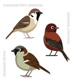 Bird Sparrow Set Cartoon Vector Illustration Royalty Free Stock Photography