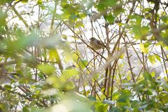 Bird sparrow sitting on branch stock photography