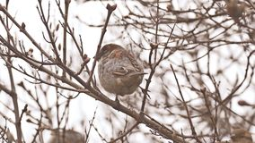 Bird sparrow sitting on nature branch tree stock video footage