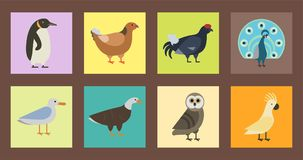 Bird species collection different vector illustration wild animal characters avifauna tropical feather pets. Bird species collection different vector Royalty Free Stock Image