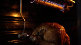 The bird on a spit turns and is fried under a gas burner in the oven. Preparing the chicken in the oven, the bird spinning under the burning gas burner and stock video