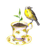 Bird, spring sprout - green growing plant in teacup. Watercolor Stock Image