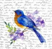 Bird of Spring vector. Bird of Spring eastern bluebird vector  on handwritten background with spring flowers Stock Photo