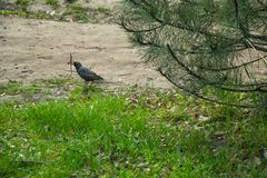 Bird in the spring warm blooming park. royalty free stock image