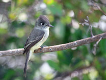 Bird squad passerines. Bird squad passerines in Cuba Royalty Free Stock Photo