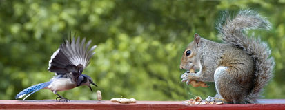 Bird and Squirrel Royalty Free Stock Photos