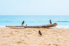 Bird stand on timber at beach Royalty Free Stock Photo