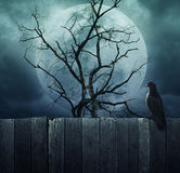 Bird stand on wood fence on spooky tree with moon, Halloween bac Royalty Free Stock Photo