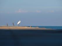 Bird standing on bridge Stock Photos
