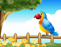 A bird standing on a  fence Royalty Free Stock Photo