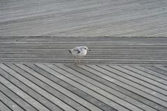 Bird standing at the harbor royalty free stock photo