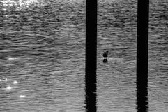 Bird standing on a lake Stock Photo