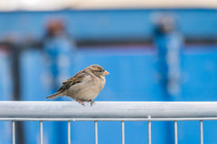 Bird standing on a metal fence Stock Photo