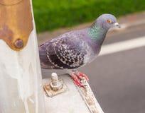 The bird standing. Stock Image