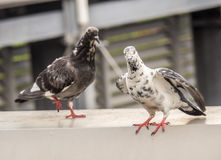 The bird standing. Royalty Free Stock Photography