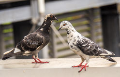 The bird are standing. Stock Image