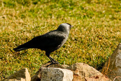 Bird standing Royalty Free Stock Photography