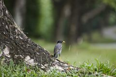 A bird standing on tree Royalty Free Stock Photography