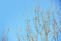 Bird standing on tree branches with blue sky. Bird on branches with blue sky. Beautiful natural rhythm Stock Photo