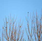 Bird standing on tree branches with blue sky Stock Images