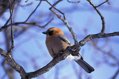 Bird Stands On Branch Royalty Free Stock Photography