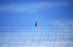 Bird stands on a wire. With blue sky background. Freedom concept Stock Images