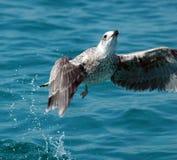 Bird start sea Stock Photo