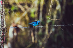 BIRD, STATE OF SANTA CATARINA, BRAZIL Royalty Free Stock Image