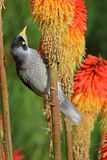 Bird on the stem of the plant. Curious Bird on the stem of the colourful plant Royalty Free Stock Photography
