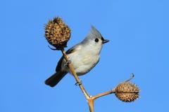 Bird On A Stick Stock Image